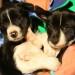 Ray x Pip pups