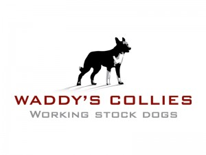 Waddys-Collies-300x225